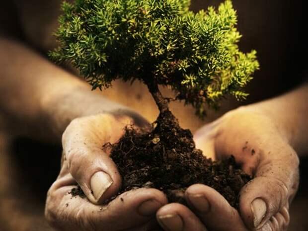 Дерево в традиционном удмуртском мировоззрении.
