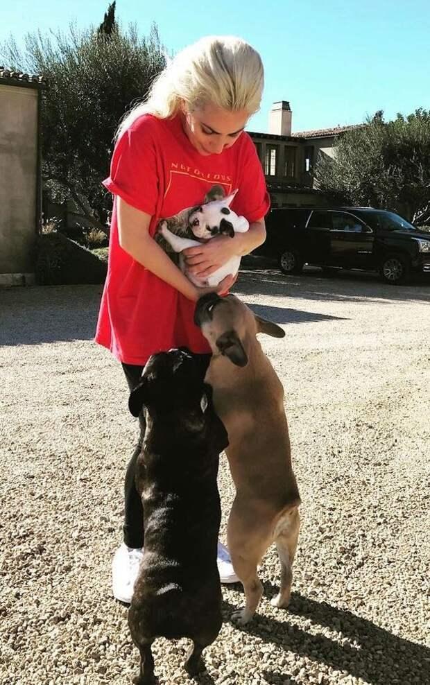 Леди Гага предлагает награду за информацию о похитителях её собак