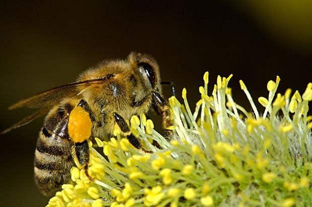 В Германии загадочным образом пропали почти все насекомые, заявляют экологи