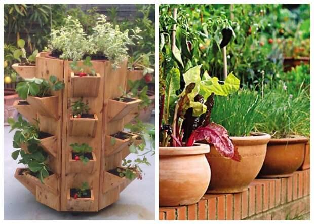 Благодаря горшкам и различным емкостям огород можно пристроить где угодно.