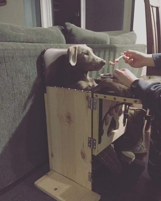 Из-за врожденного недуга щенок вынужден кушать только на специальном стульчике