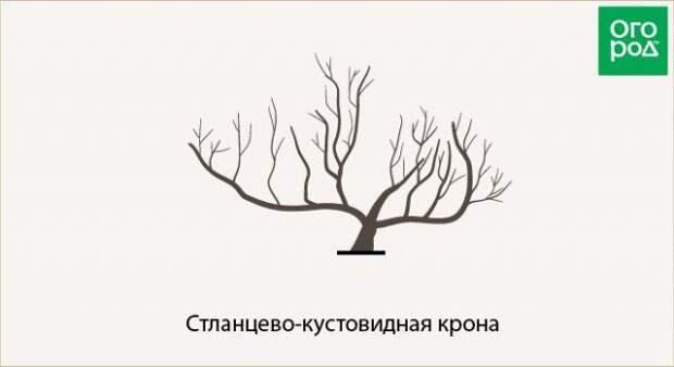 стланцево-кустовидная крона