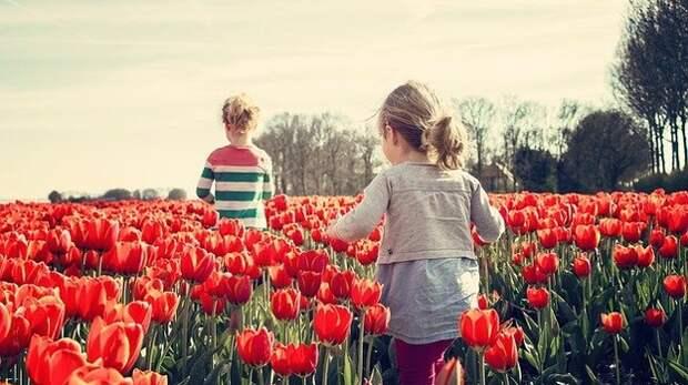 В Крыму вывели два новых сорта тюльпанов
