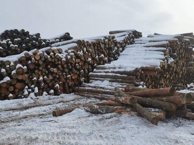 В Забайкалье выявили 51 случай незаконного ввоза леса с начала года