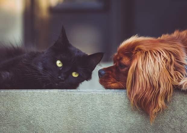 Владельцев кошек и собак в СВАО приглашают на бесплатные лекции