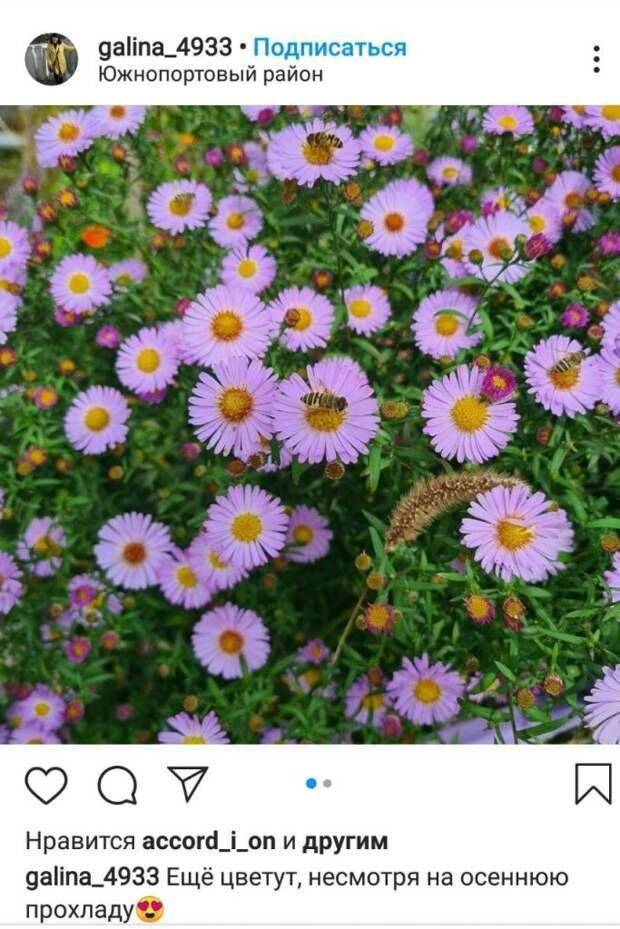 Фото дня: осенние цветы