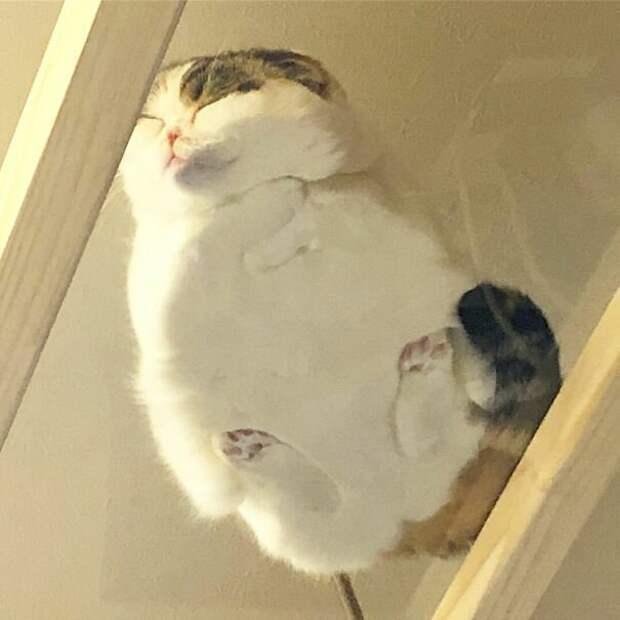 Господи, как мило! котики, коты, милота, мотики, сквозь стекло