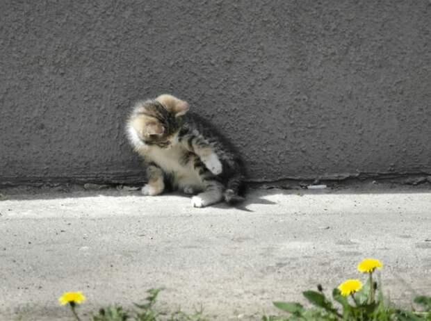 Нет благодарнее животного, чем то, что спасено от несчастной бездомной жизни. Эти малыши нуждаются в спасении!