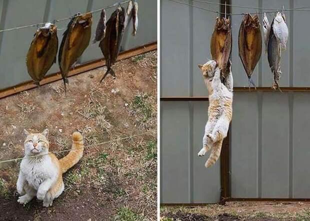 Попались с поличным: это про 15 котов, достойных полицейского протокола