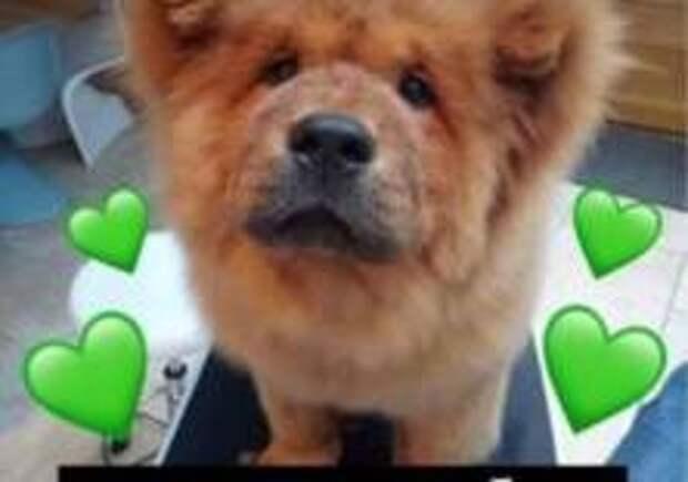 В Британии собаку арестовали за укус полицейского