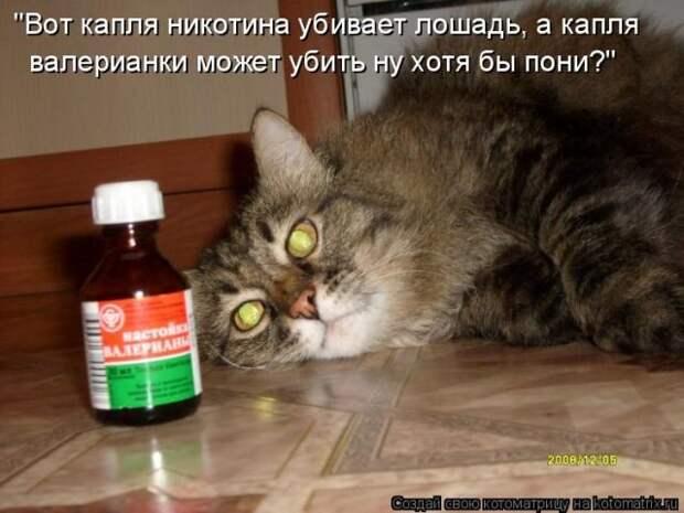 Самые уморительные котоматрицы за прошедшую неделю