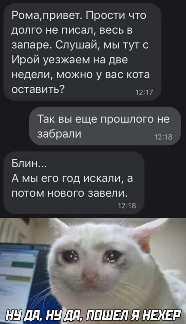 Оставить на 2 недели котика у друга