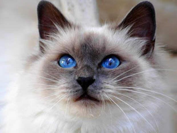Глаза цвета неба