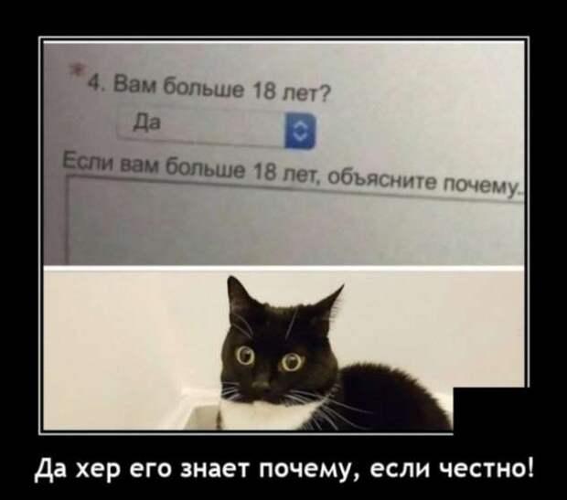 5402287_zabavatutza64214051910202020 (633x559, 21Kb)