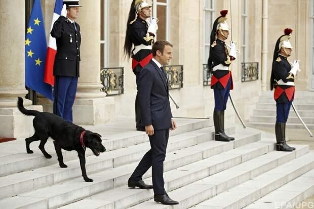Макрон продает своего пса за 99 евро