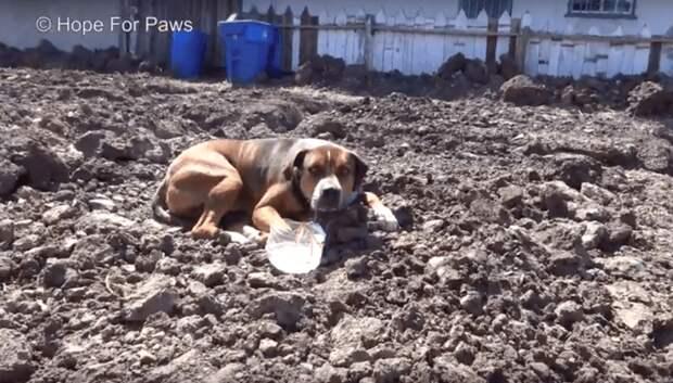 Испуганная собака вжималась в грязь… Она отказывалась покинуть стройку и безумно боялась мира людей!