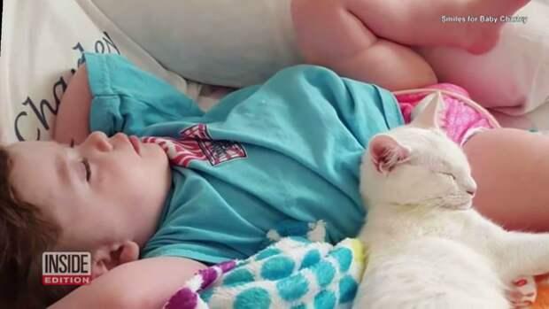 История возвращения пропавшего котёнка, лучшего друга слепой девочки