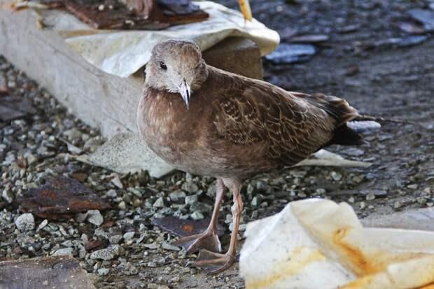 Слепая птица сразу услышала наше приближение Фото: Александр ВАСИЛЬЕВ