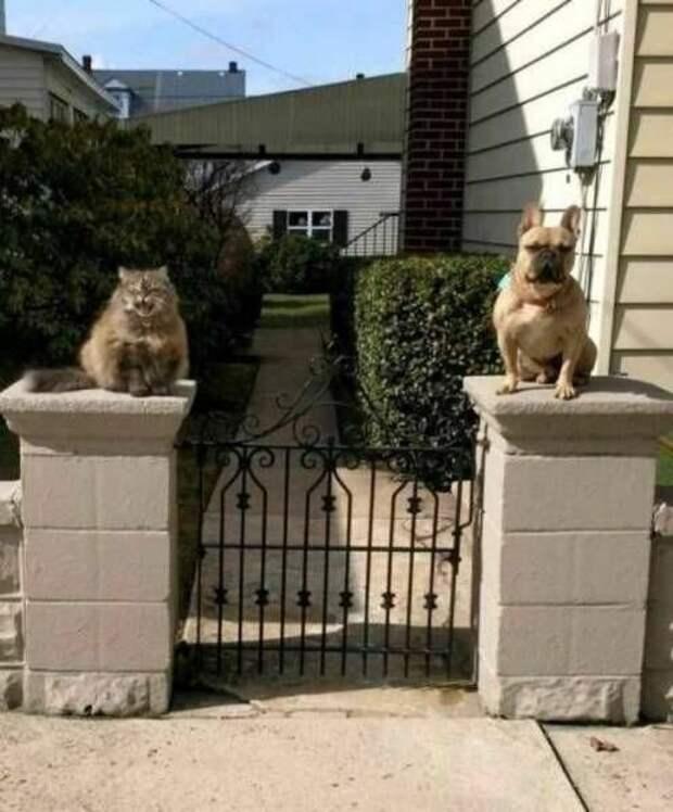 Пост о дружбе дружба, животные, коты, собака