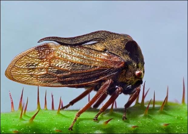 insects36 Портреты насекомых