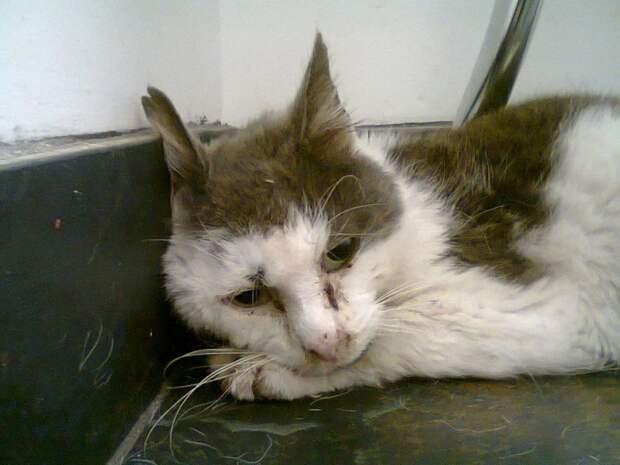 Кот истратил все свои 9 жизней, прожив 11 лет на улице