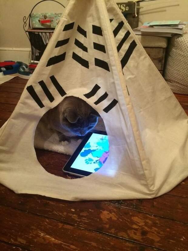 У этого кота есть свой IPad.. и собственная юрта домашний питомец, животные, жизнь, кот, прикол