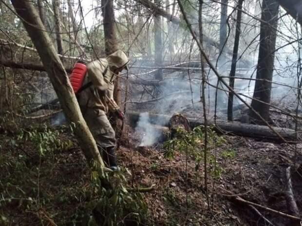 В Игринском районе тушат пожар на торфянике
