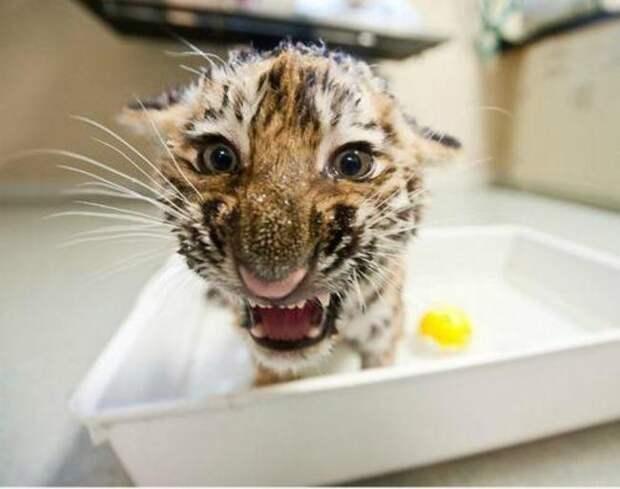милые животные  у которых не получилось выглядеть устрашающе (18)