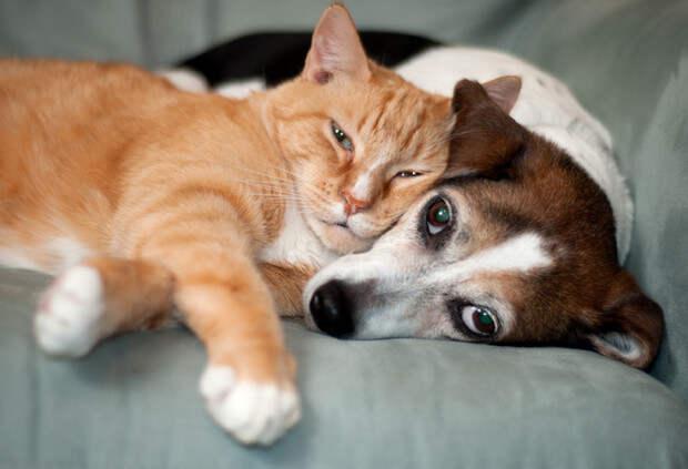 Зовите психолога: породы собак и кошек с самым сложным характером