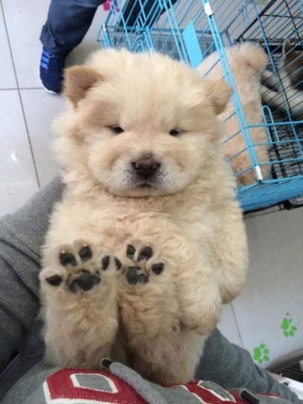 Милые щенки, которые подарят позитив