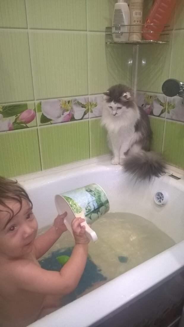 Заводить кота в мои жизненные планы не входило...