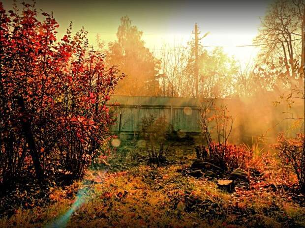 САД, ЦВЕТНИК И ОГОРОД. Осенний сезон в саду