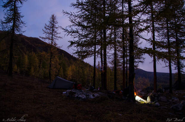 Наш уютный лагерь в осеннем лиственничном боре