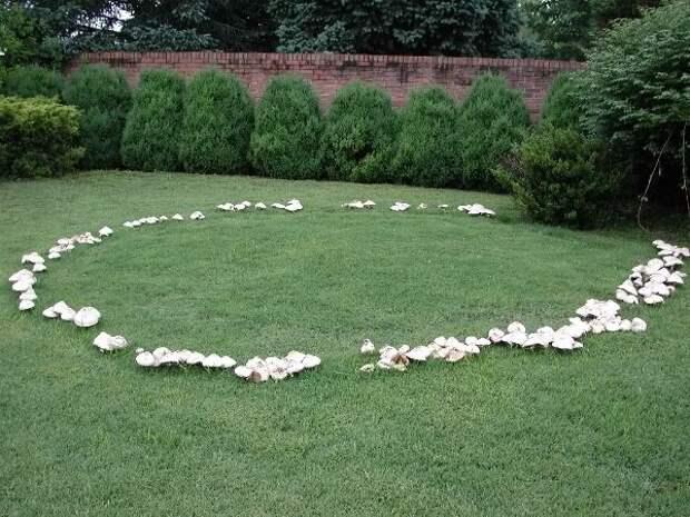 Fungi sapiens – гриб разумный?