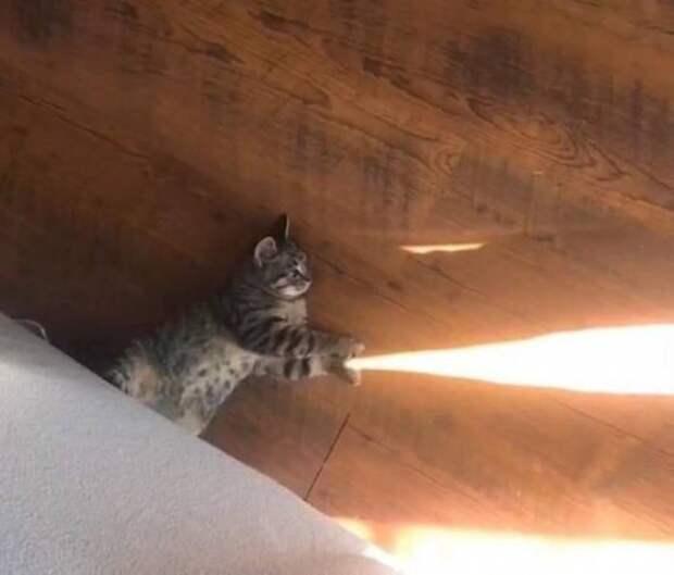 Кот пускает солнечные лучики