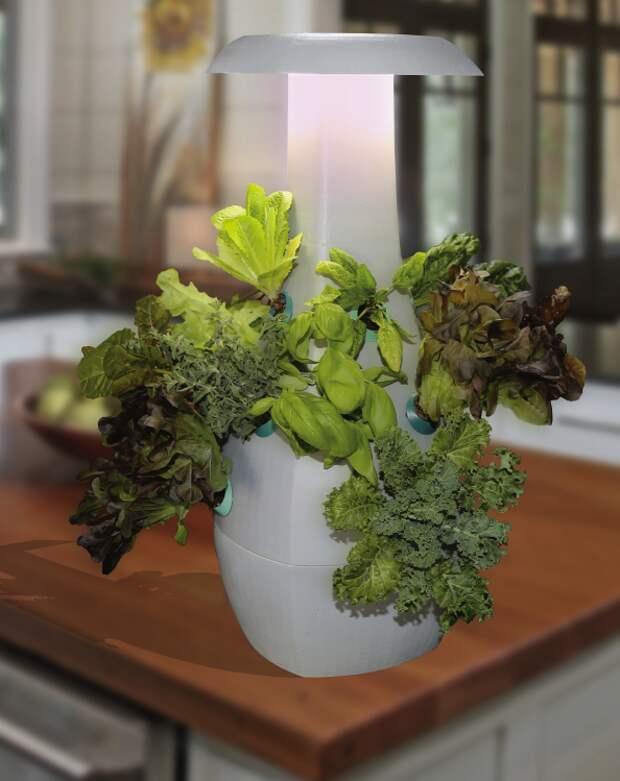 Настольный огород: свою зелень взрасти сам