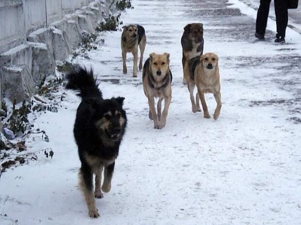 Скандал с отловом бродячих собак в Улан-Удэ грозит перерасти в уголовное дело