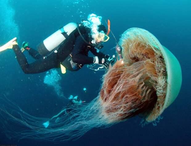 Яд, желудок и рот: стоит ли бояться медуз Черного моря (ФОТО)