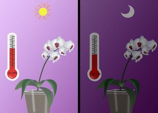 Разница между дневной и ночной температурами для орхидей