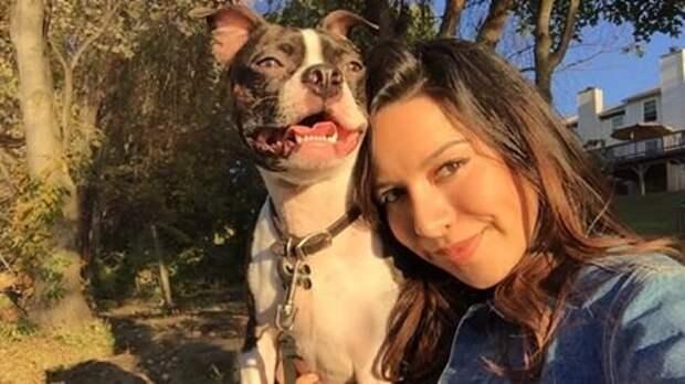 Собака, пропавшая после аварии, нашла свою семью