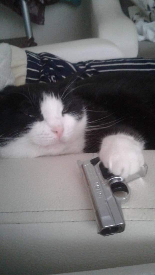 Котик с пистолетом