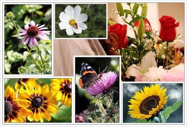 Комнатные цветы-талисманы знаков зодиака.