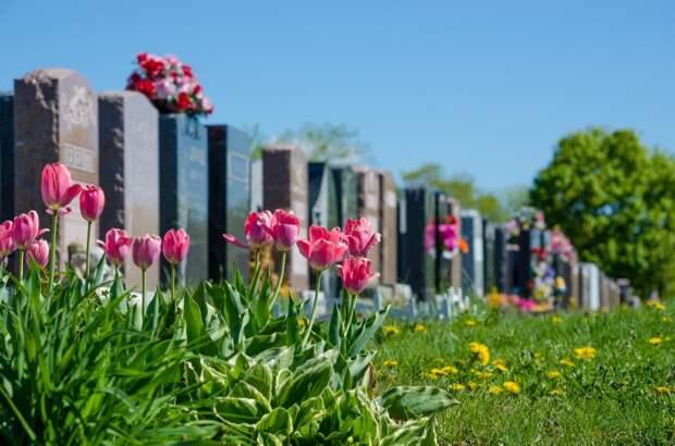 цветы на кладбище фото