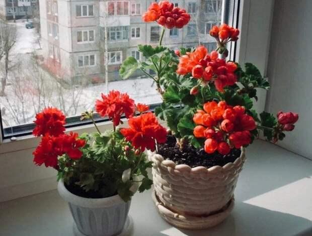 5 домашних растений, защищающих от порчи и сглаза