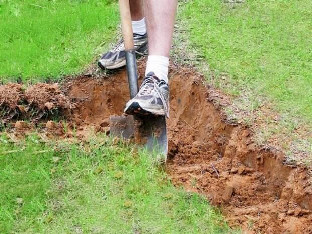 Как улучшить глинистую почву?