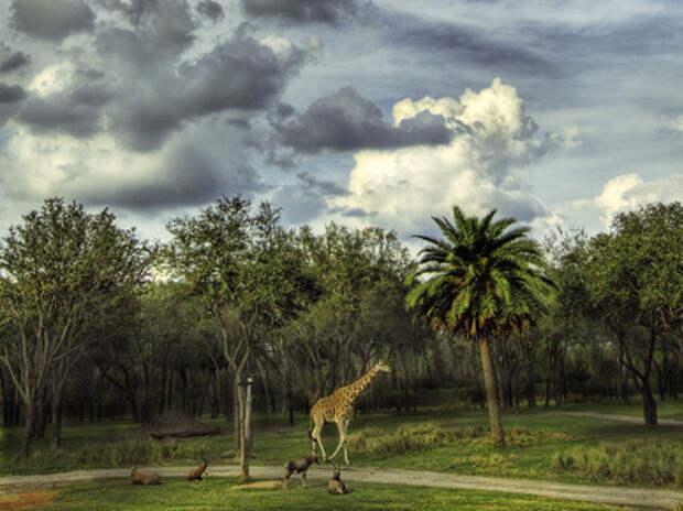 «Под небом Африки моей…», охотничья - философская