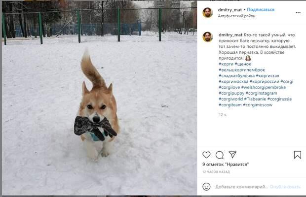 Фото дня: пёс из Алтуфьева узнает хозяина по перчаткам