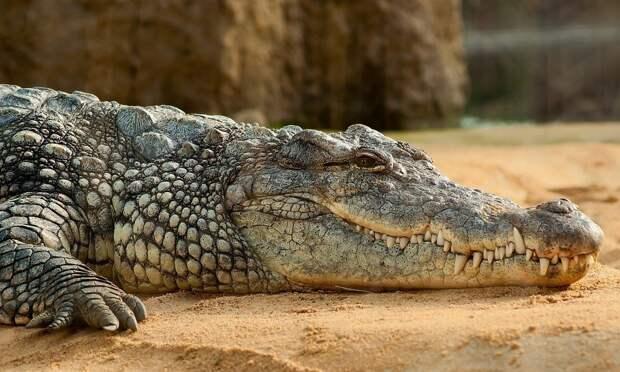 Он не соблюдал карантин: подозреваемый в коронавирусе житель Руанды стал жертвой крокодила