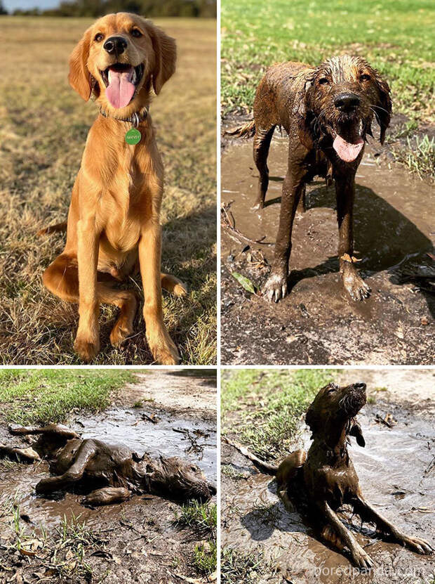 30 причин никогда не позволять своей собаке валяться в грязи