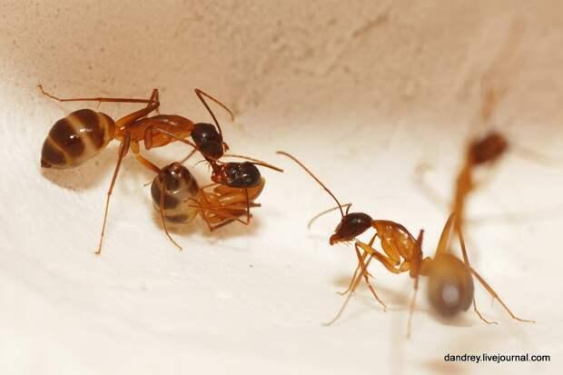 Как я строил муравейник